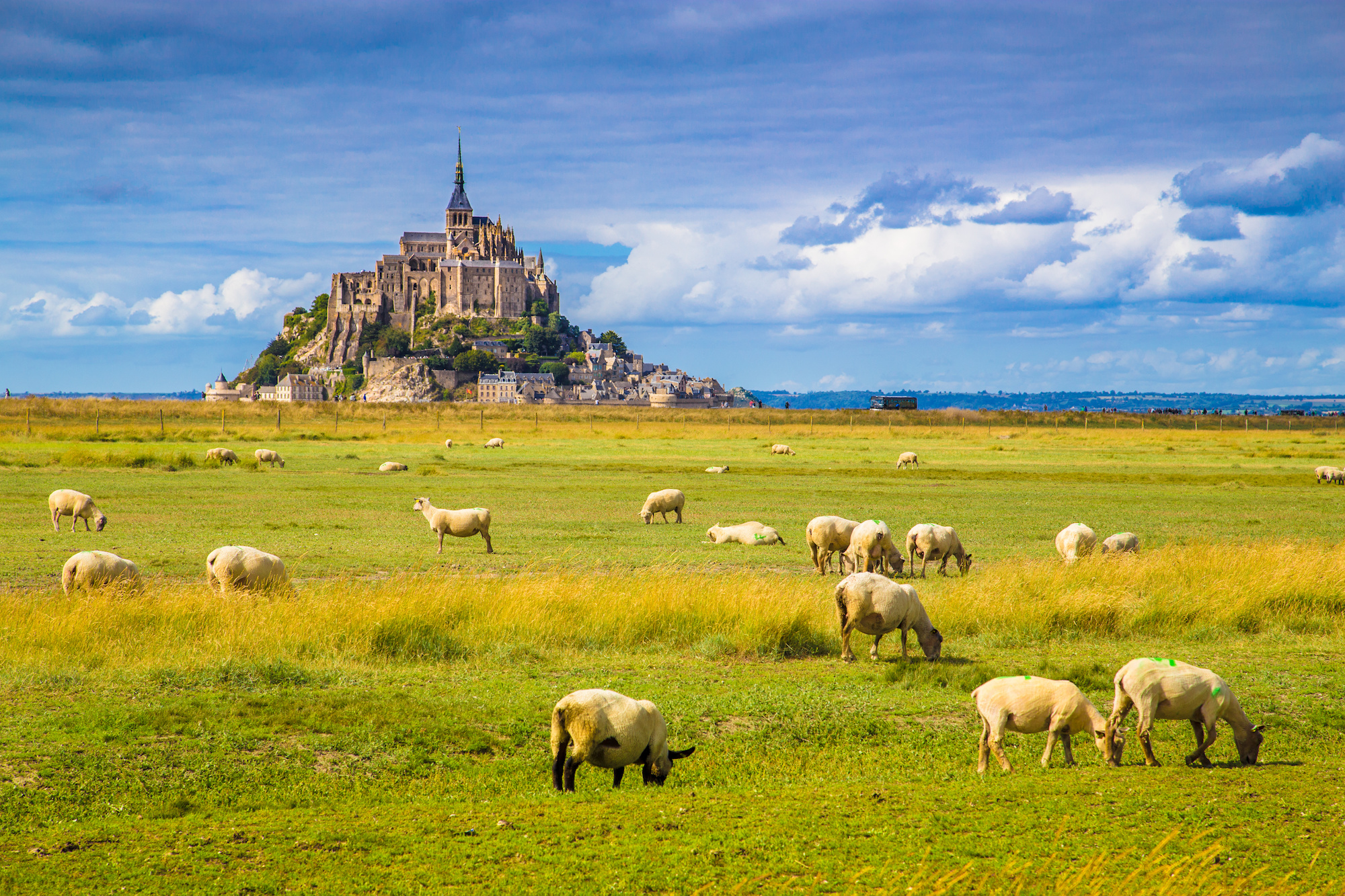 Le Mont Saint-Michel with sheep grazing on green meadows in summer, Normandy, France