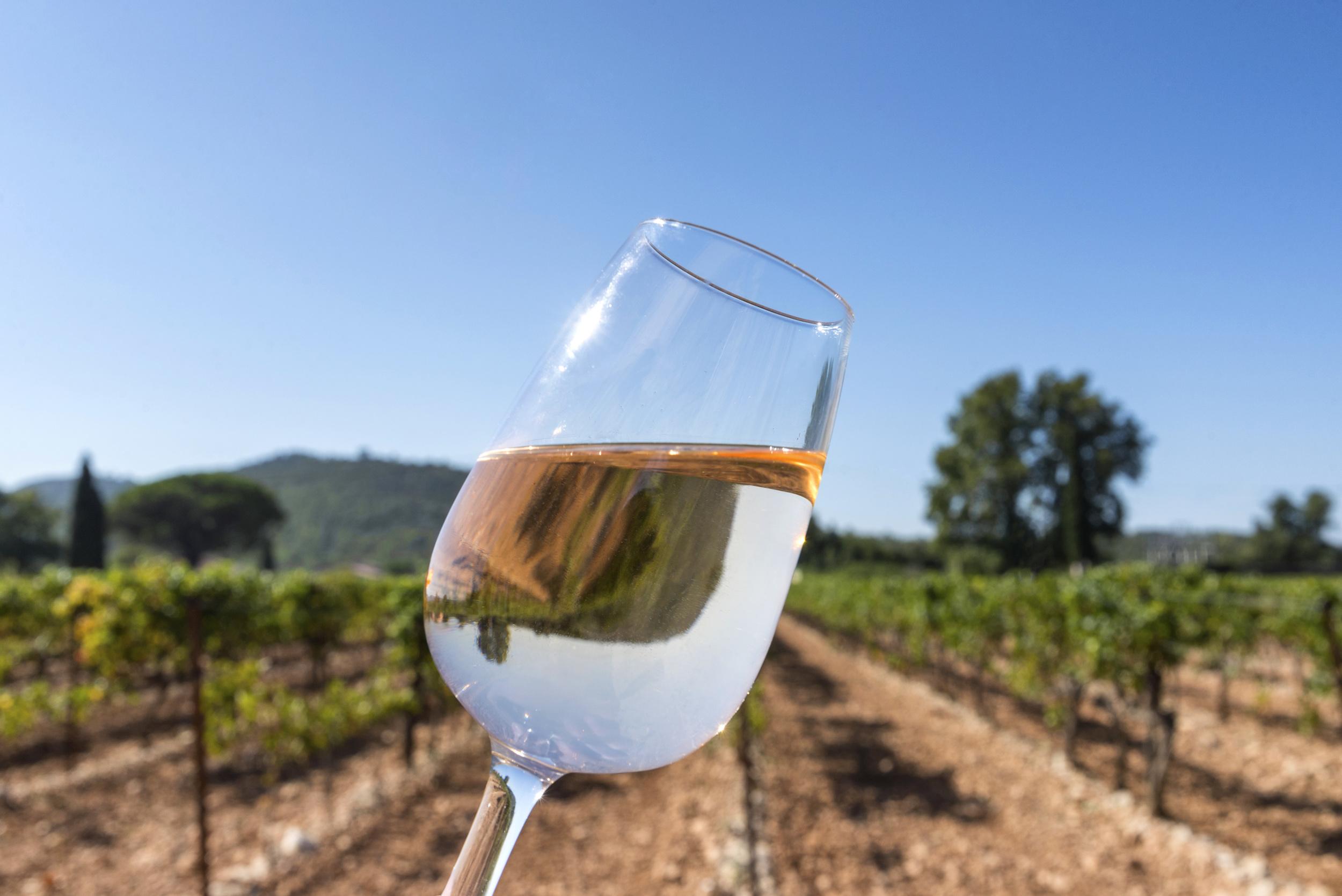 Verre de rosé devant une vigne